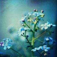 forget-me-not by oxygen2608