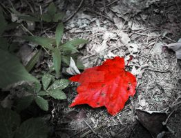 Standing Out by star1luver2006
