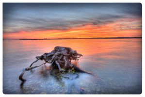 Stump and Sunset by AmirNasher