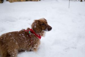 weiner in the snow by pringle753