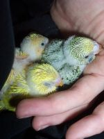 hold my hand by parrots4life