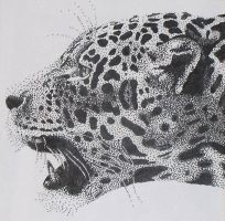 Jaguar Stippling by Tessa-Wren