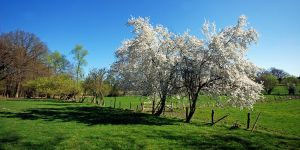 spring in the fields by augenweide