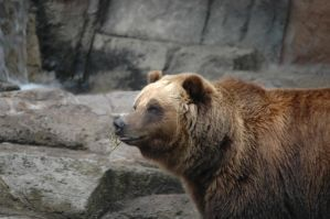 Brown bear, Brown bear by StarryEyedDayDreamer