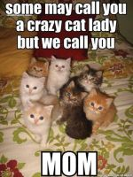 Funny Kitty Photo... by Rose9227614