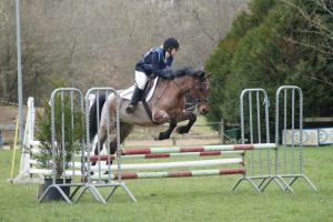 Roan pony - eventing stock by MagicLecktra