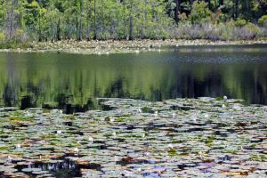 Reflective lily pads by eeyorefan