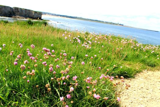 Flowers along the cliff by the sea by RadicalDreamerSteph