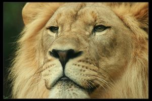 King by timseydell