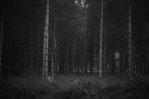 Will you go down to the woods today? by DesuDan