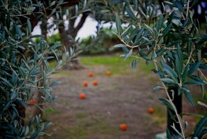 From Olives to Oranges by WorldsInWorld