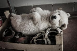 This is how i sleep by IJPhotography