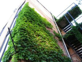 Ivy Building 5 by abuseofstock