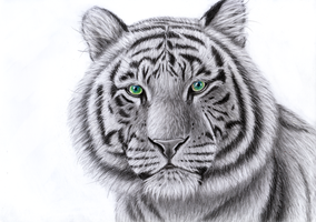 White tiger by Takas15