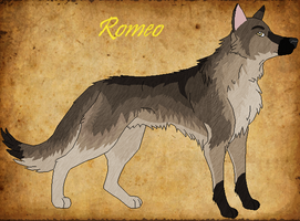 Romeo by Windhaven-Kennel