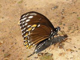 Butterfly 1758 by fa-stock