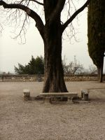 Lonely Tree and Benches_Stock by MJ84-StockPhotos