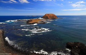 Seal Island, The Nobbies, Phillip Island by Okavanga