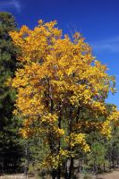 Fall Color 2 by worldtravel04