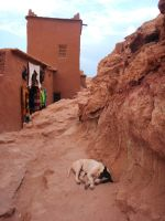 Morocco 3- Casba and Dog by FranE13