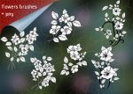 Flowers Brushes-10 by roula33
