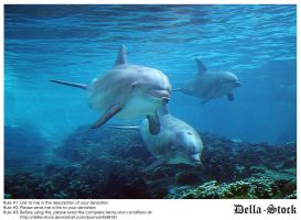 Sea World: Dolphin Cove.4 by Della-Stock