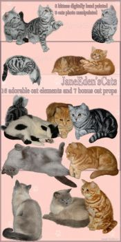 JaneEden'sCats png's stock by JaneEden