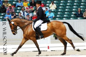 Peter Barry Dressage III by zeeplease