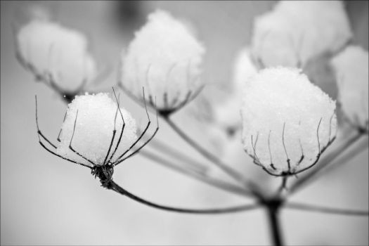 White by Daniel-Wales-Images