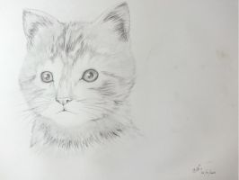 Kitteh Sketch by TheArster