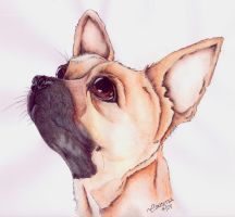 Chihuahua by concettasdesigns
