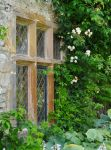 Levens Hall 95 by Forestina-Fotos