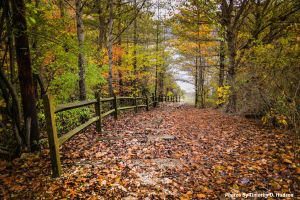 Falltrailalongthefence by thudson84