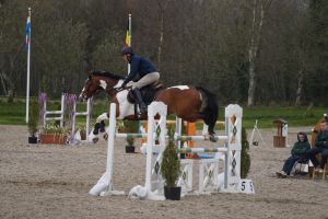 Pinto horse - Show jumping stock 3.3 by MagicLecktra