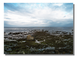 Pacific Tide Pools by WillFactorMedia