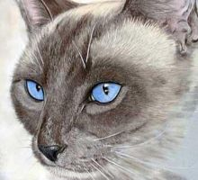 Siamese Cat by burntoutsouls