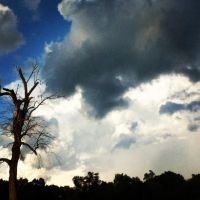 Creepy tree, and clouds! by LunaPicture