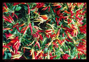 Peppers by Gil-Levy