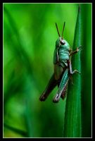 Be patient young grasshopper by MessiahKhan