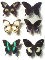 moths and butterflies stock 52 by hatestock