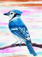 Blue Jay by CountryDreamer