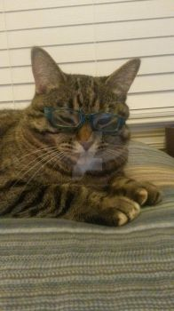 ok guys I put glasses on my cat by CindertheRainMudwing