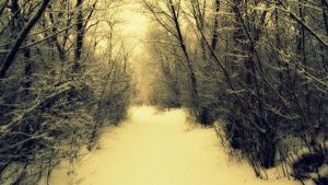 Winter path by taliby97