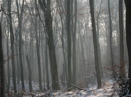 winter forest 2 by boreasz