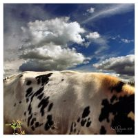 Cloudy Cow by Pajunen