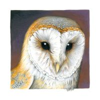 Barn Owl miniature by Heliocyan