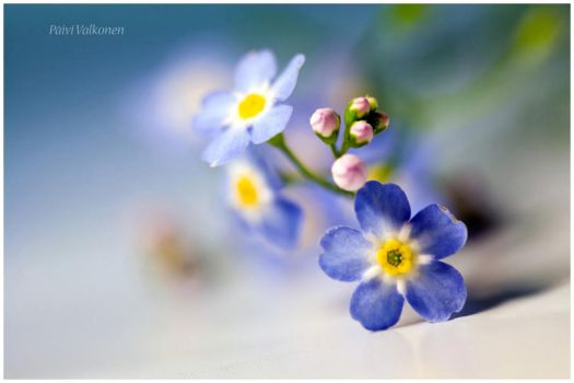 Forget me not.. II by closer-to-heaven