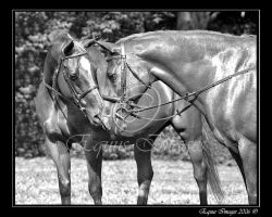 The Old Girls by equusimages