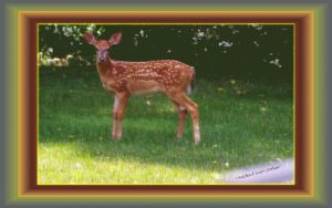 Michael  Deer  Jordan   Framed By Runtofthelitter by fractal2cry