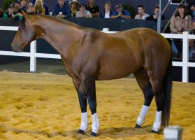 STOCK - 2014 Total Equine Expo-19 by fillyrox